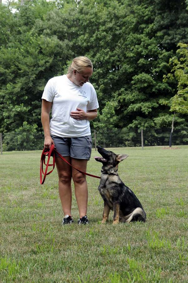 Cookie (German Shepherd) - Boot Camp Dog Training